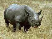 rhino7.jpg