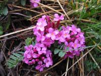 fleurs07_05_06_010_702.jpg