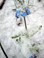 neige_fleurs31_05_06_009_500.jpg