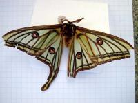 papillon03_06_06_004_700.jpg