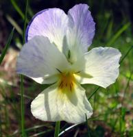 fleurs01_06_06_019_700.jpg