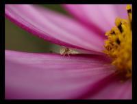 fleurs01_10_2006_072_700c.jpg